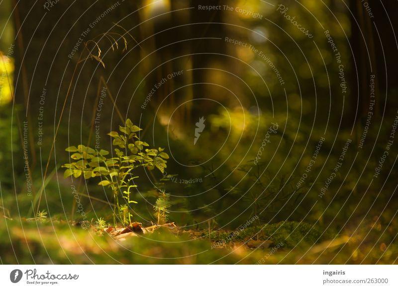 Kleiner leerer Blaubeerstrauch Natur grün schön Baum Pflanze Blatt Einsamkeit Wald gelb Landschaft Gras Stimmung Erde braun natürlich Wachstum