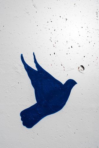 ! blau weiß Tier Graffiti Mauer Freiheit fliegen Zeichen Information Frieden Krieg Politik & Staat Taube Gesetze und Verordnungen Staatsform Straßenkunst