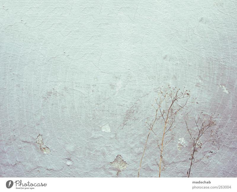 If less is more, maybe nothing is everything. Mauer Wand Fassade Stein Beton dreckig frei kalt kaputt Kitsch trashig trist Stadt Hoffnung Glaube träumen