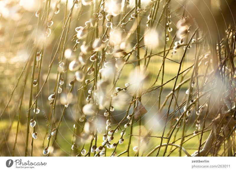 Weide Natur Baum Pflanze Sonne Blatt Umwelt Landschaft Frühling Glück springen Garten Wetter Klima Fröhlichkeit gut Schönes Wetter