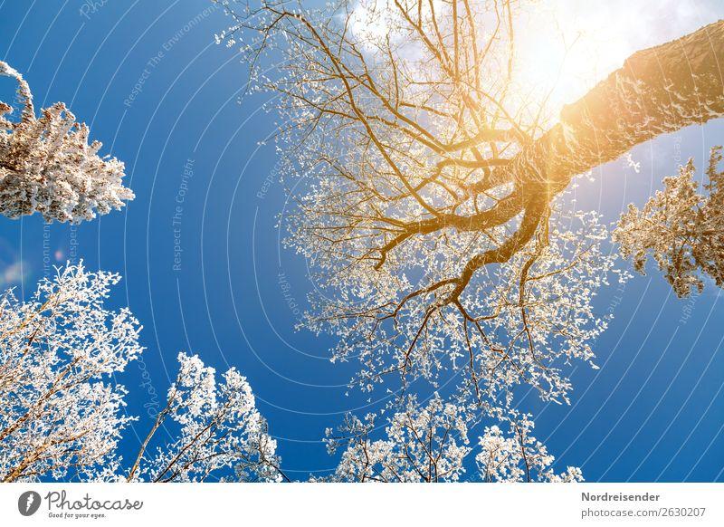 Baumkronen im Winterwald Ferien & Urlaub & Reisen Natur blau Landschaft weiß Sonne Wald Schnee Ausflug Eis gold Idylle Schönes Wetter Klima