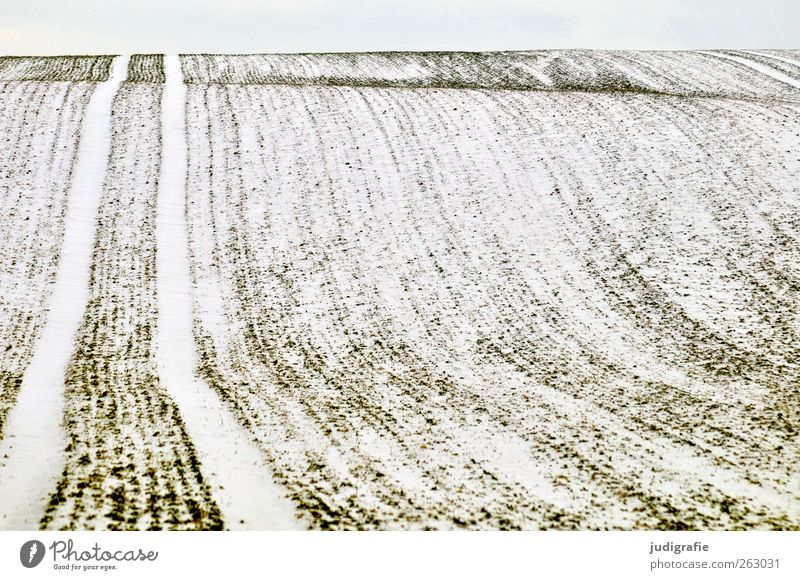Uckermark Natur Winter ruhig Umwelt Landschaft kalt Schnee Feld Klima Spuren Wellenform