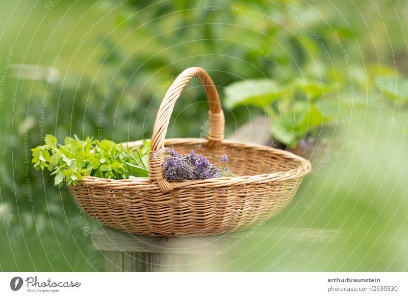 Frisch gepflückte Kräuter im Korb Lebensmittel Kräuter & Gewürze Ernährung Bioprodukte Vegetarische Ernährung Lifestyle kaufen Gesundheit Gesunde Ernährung