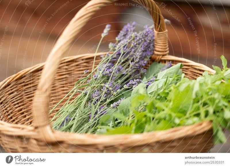 Korb mit Kräutern aus Kräutergarten Lebensmittel Kräuter & Gewürze Lavendel Lavendelernte Minze Ernährung Bioprodukte Vegetarische Ernährung kaufen Gesundheit