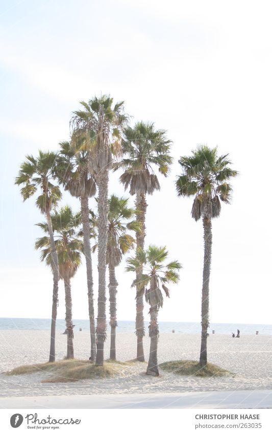 PALMEN VENICE BEACH Himmel Natur Ferien & Urlaub & Reisen Sommer Meer Strand Sand Horizont Schönes Wetter