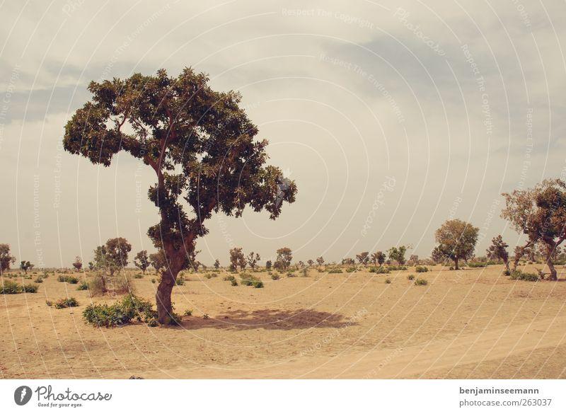 mali baum #2 Himmel Natur Baum Landschaft Wärme Sand Erde Sträucher trist Wüste heiß Afrika kahl Dürre Steppe Grünpflanze