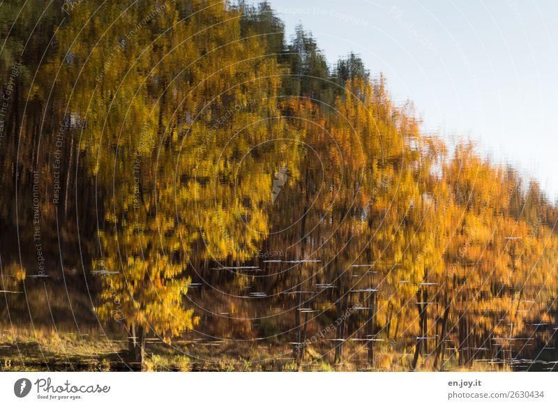 Bach ohne Grenzen Natur Pflanze Landschaft ruhig Wald Religion & Glaube Herbst gelb Traurigkeit Zeit See orange träumen Idylle fantastisch Vergänglichkeit