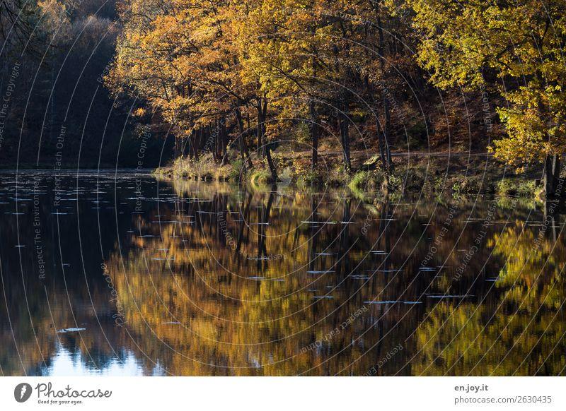 Spaziergang Ferien & Urlaub & Reisen Ausflug Umwelt Natur Landschaft Sonnenlicht Herbst Schönes Wetter Baum Wald Seeufer gelb orange Erholung Idylle Klima ruhig