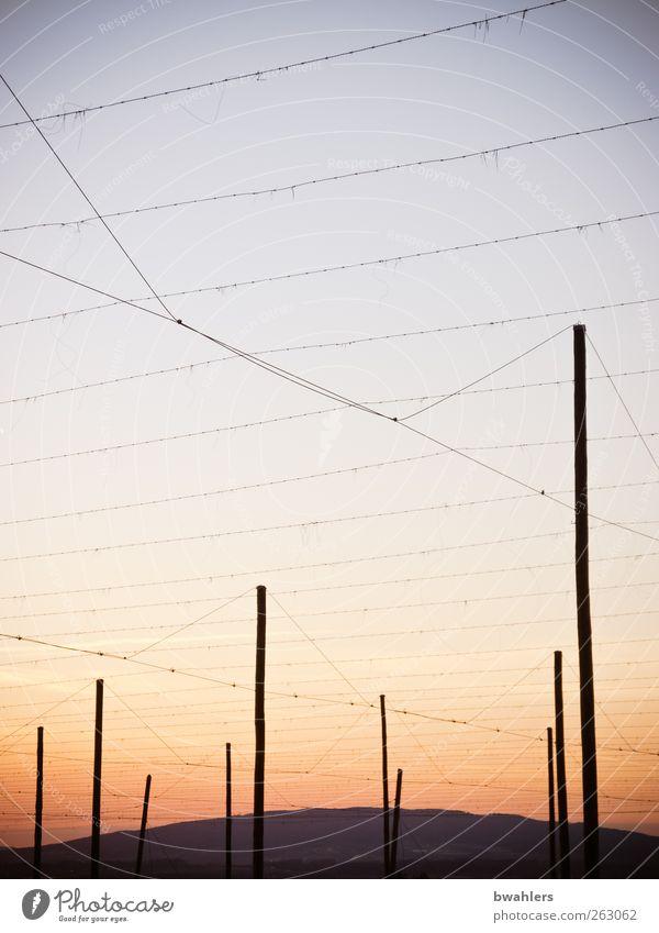 vernetzt Natur Landschaft Himmel Horizont Sonnenaufgang Sonnenuntergang Feld Hügel Menschenleer ruhig Hopfen Kulturlandschaft Hopfenstangen Drähte netzartig