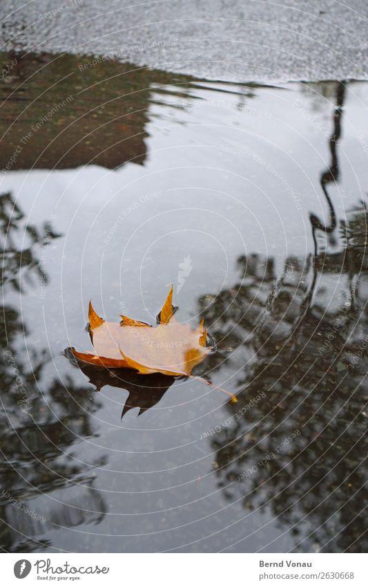 Blatt Natur Herbst schlechtes Wetter Regen Verkehr Verkehrswege Straße Tod Pfütze Wasser Herbstlaub Asphalt braun grau Baum Saison fallen Farbfoto Außenaufnahme