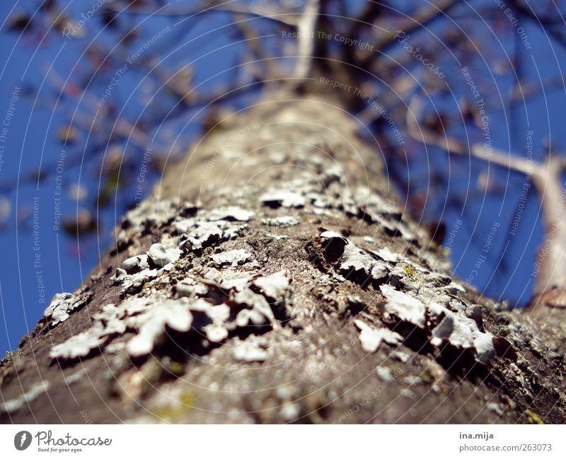 Baum Himmel Natur blau Pflanze Baum Blatt Winter Herbst oben Frühling grau braun Zukunft Schönes Wetter Ast Lebewesen