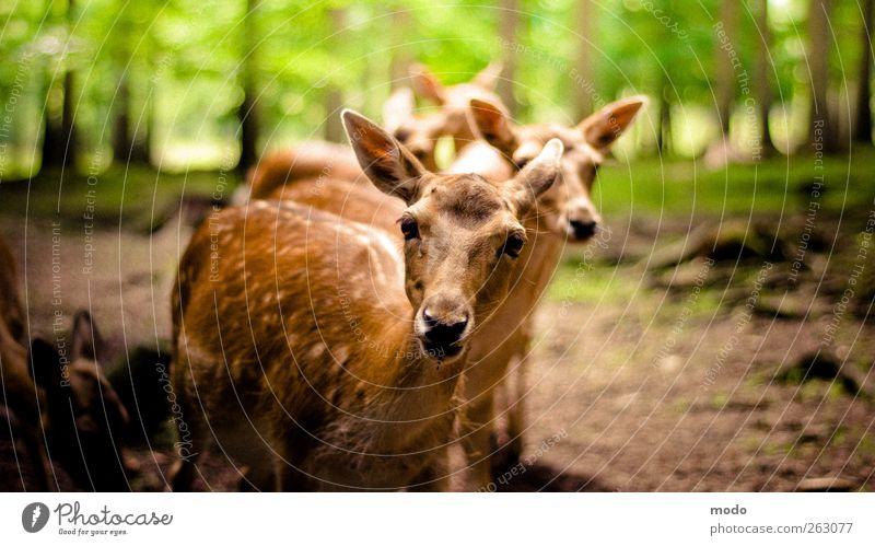 Muh? Natur grün Baum Tier Wald Wärme Stimmung hell braun Zusammensein Zufriedenheit wild natürlich ästhetisch authentisch Tiergruppe