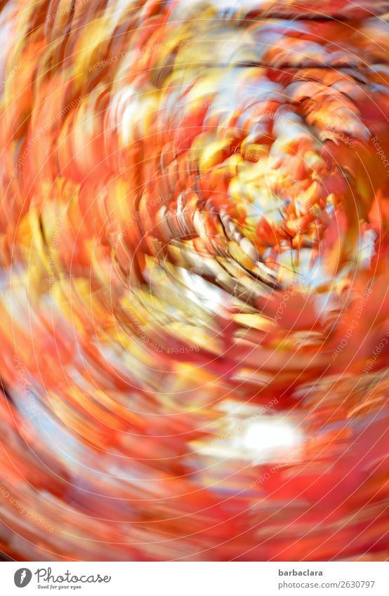 verkehrte Welt | orkanartige Stürme Natur Pflanze Himmel Herbst Baum Sträucher Blatt Park leuchten bedrohlich Geschwindigkeit verrückt mehrfarbig Stimmung