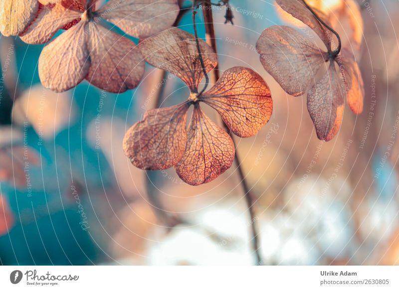 Herbstzeit Design Wellness Spa Dekoration & Verzierung Trauerkarte Trauerfeier Beerdigung Natur Pflanze Winter Blume Blüte Hortensienblüte Garten verblüht blau
