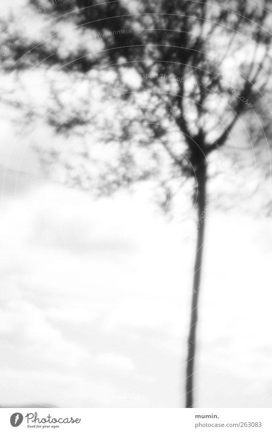 Lochkamera. weiß Baum Pflanze schwarz Holz