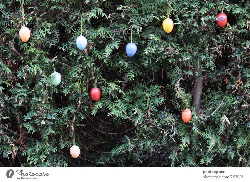 O O O O Lebensmittel Ernährung Frühstück Feste & Feiern Ostern Pflanze Frühling Grünpflanze mehrfarbig Frühlingsgefühle Ferien & Urlaub & Reisen Tradition