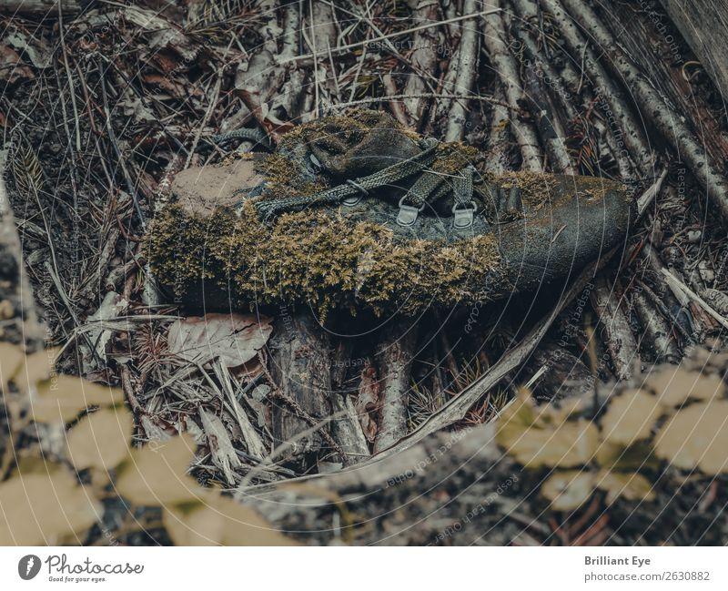 Die Natur holt sich den Schuh zurück Umwelt Pflanze Moos Moosteppich Wald Schuhe alt außergewöhnlich dreckig nah nachhaltig trashig wild grün Senior