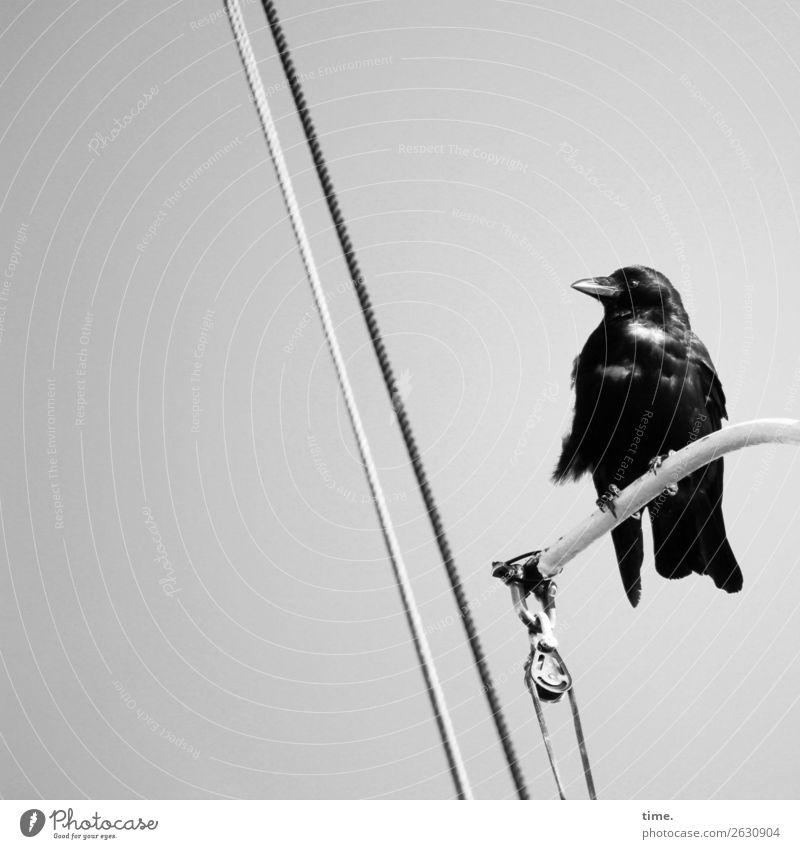 looking for adventure Schifffahrt An Bord Seil Eisenrohr Wildtier Vogel 1 Tier beobachten festhalten Blick sitzen warten maritim schwarz Wachsamkeit