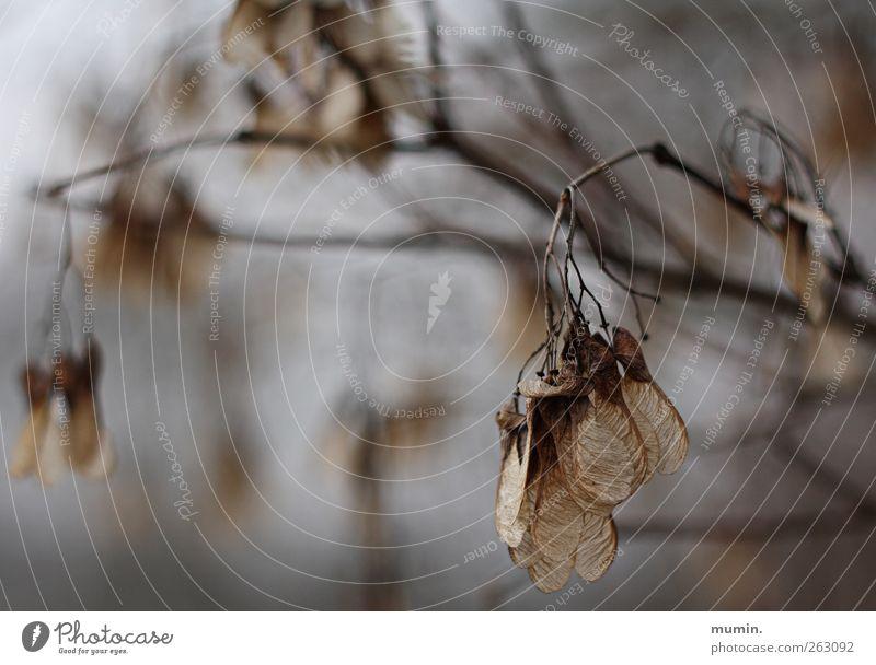 Winterspaziergang Natur Baum Pflanze Winter Blatt braun verblüht dehydrieren