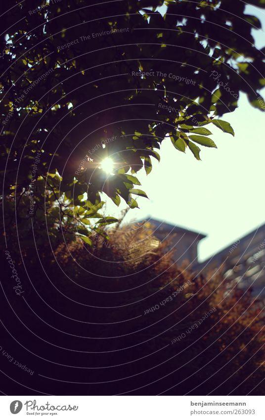 pflanze garten sonne Himmel Natur grün Baum Pflanze Sonne Blatt Umwelt Landschaft Herbst Wärme Garten Park braun Sträucher Schönes Wetter