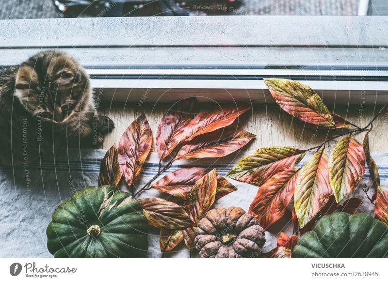 Häusliches Stillleben mit Katze und Kürbisse am Fenster Lifestyle Design Erholung Häusliches Leben Wohnung Haus Traumhaus Innenarchitektur