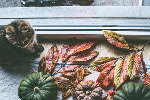 Häusliches Stillleben mit Katze und Kürbisse am Fenster Haus Erholung Tier Lifestyle Leben Herbst Innenarchitektur Häusliches Leben Design Wohnung
