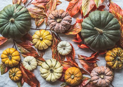 Verschiedene Kürbisse mit Herbstlaub Lebensmittel Gemüse kaufen Stil Design Gesunde Ernährung Halloween Dekoration & Verzierung Sammlung Hintergrundbild