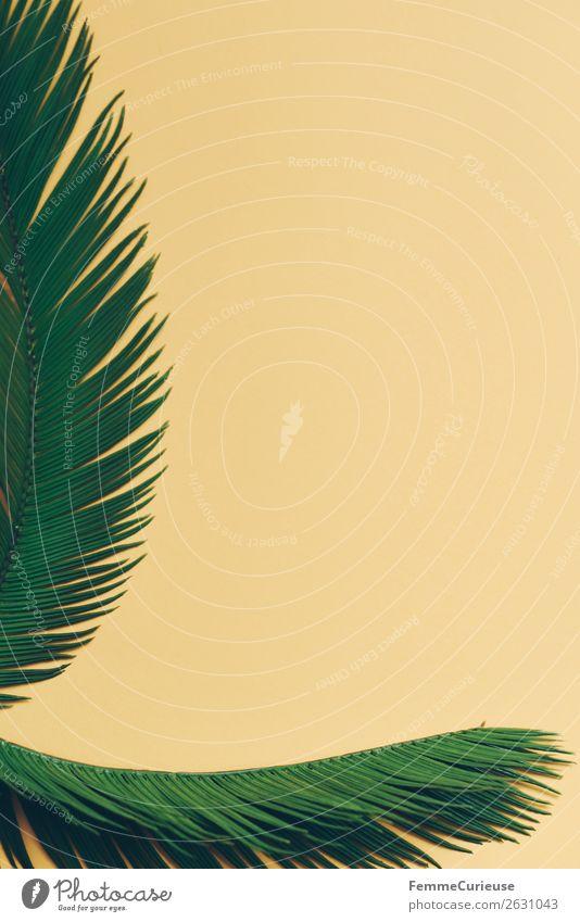Two palm branches on yellow background Natur Palme Palmenwedel Grünpflanze Pflanze Pflanzenteile gelb Dekoration & Verzierung Rahmen Farbfoto Studioaufnahme