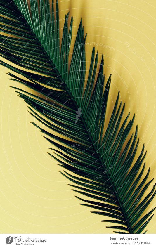 Palm branch on yellow background Natur Palme Palmenwedel Pflanzenteile gelb grün Farbfoto Studioaufnahme Nahaufnahme Hintergrund neutral