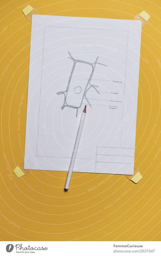 Drawing: cells from the upper epidermis of an onion scale Natur gelb Papier Bildung Zeichnung Bleistift Schreibwaren Schulunterricht Biologie