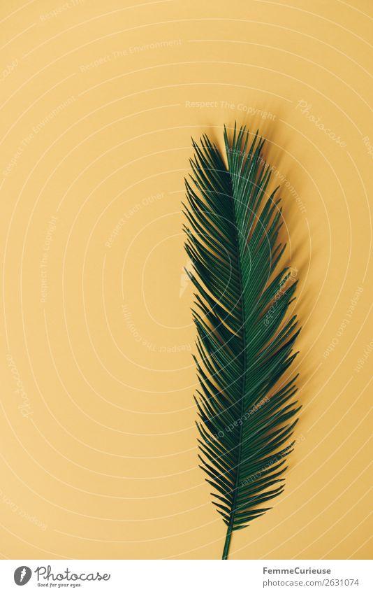 Palm branch on yellow background Natur Palmenwedel gelb Pflanze Pflanzenteile Hintergrund neutral Grünpflanze Stengel Farbfoto Studioaufnahme Textfreiraum links