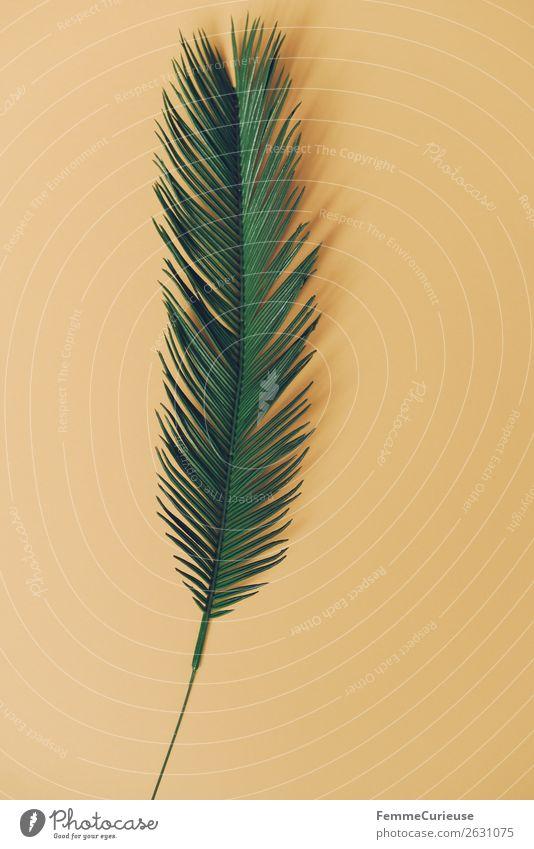 Palm branch on yellow background Natur Schreibwaren Papier Kreativität Palme Palmenwedel Pflanze Pflanzenteile grün gelb Freifläche Design Strukturen & Formen