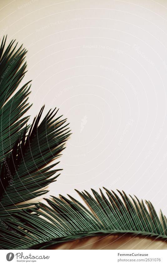Three palm branches on neutral ground Natur Palmenwedel Pflanze Pflanzenteile Grünpflanze Farbfoto Studioaufnahme Textfreiraum rechts Textfreiraum oben