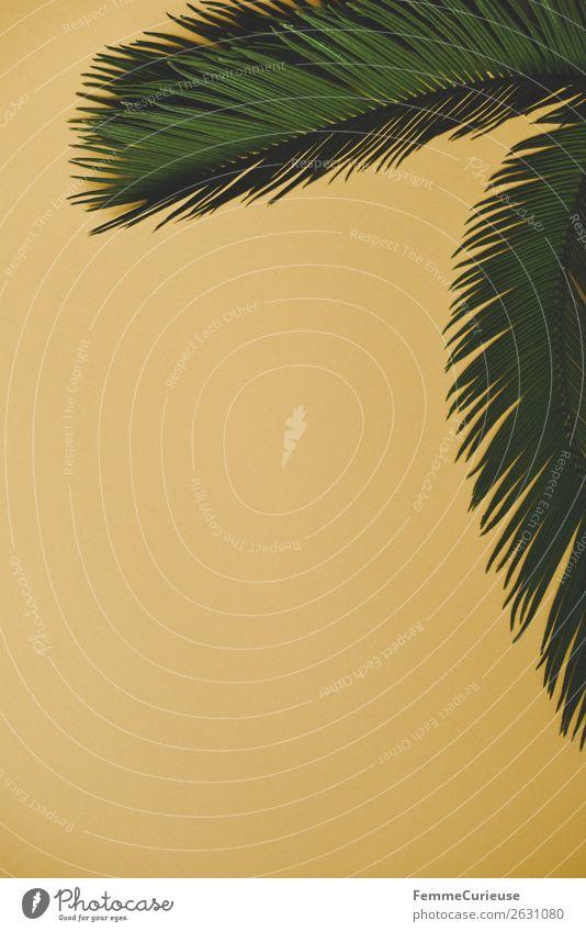 Palm branches on yellow background Natur Kreativität Schreibwaren Papier gelb grün Palme Palmenwedel tropisch Design Farbfoto Studioaufnahme Textfreiraum links