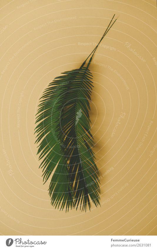 Two palm branches on yellow background Natur Palme Palmenwedel Pflanze Pflanzenteile gelb Grünpflanze Dekoration & Verzierung Farbfoto Studioaufnahme