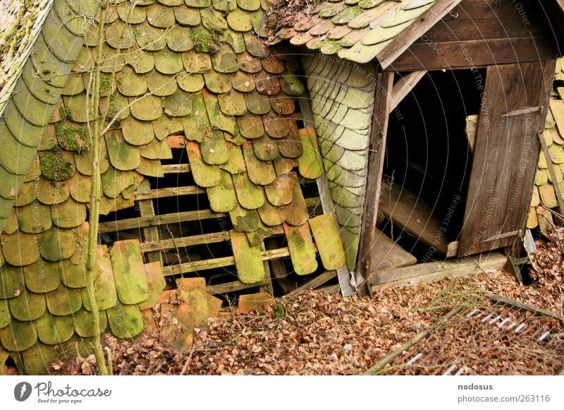 Unterschlupf trist Moos bewachsen Versteck Hütte verfallen Verfall Zweige u. Äste Blatt Schiefer Schieferdach Holzhütte Eingangstür Dach alt Schindeldach