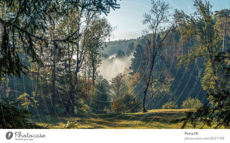 Waldlichtung Ausflug Ferne Umwelt Natur Landschaft Pflanze Himmel Sonnenlicht Herbst Schönes Wetter Nebel blau braun gelb grün Gefühle Stimmung Lebensfreude