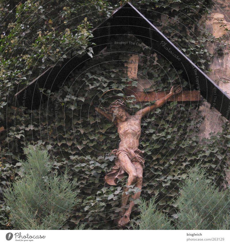 Kruzifix grün Pflanze Blatt Tod Wand Holz Religion & Glaube Mauer braun Kreuz Jesus Christus Grünpflanze Qual Dornenkrone