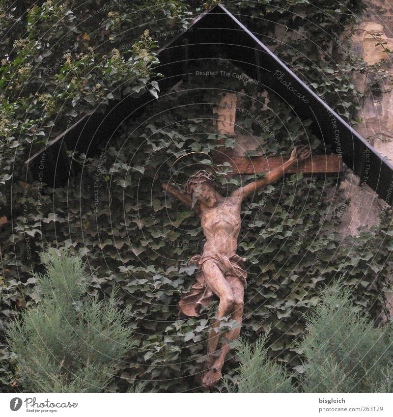 Kruzifix Pflanze Blatt Grünpflanze Mauer Wand Holz Kreuz braun grün Glaube Religion & Glaube Tod Jesus Christus Dornenkrone Qual Todeskampf Farbfoto