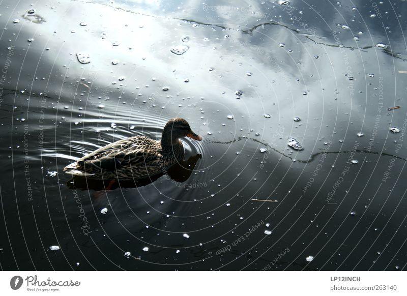 Hallo Daisy, hier ist Duck!... Natur Wasser Tier Umwelt See Schwimmen & Baden Fluss Schönes Wetter Seeufer Flussufer Ente Teich Umweltverschmutzung