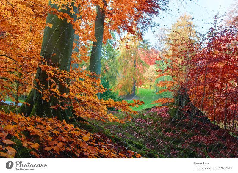 Es herbstelt... Umwelt Natur Landschaft Pflanze Herbst Klima Wetter Schönes Wetter Baum Sträucher Buche Garten Park Wiese Wald Hügel Kassel Bad Wilhelmshöhe