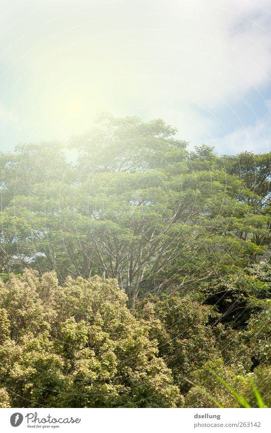 Urwald Himmel alt blau grün Baum Pflanze Sommer Wärme braun natürlich ästhetisch Schönes Wetter Urwald exotisch