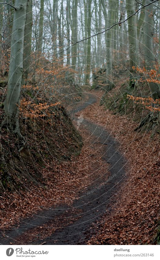 Naturbursche Umwelt Landschaft Pflanze Erde Baum Sträucher Wald wandern dreckig kalt nass natürlich wild braun grau rot schwarz feucht Herbst Wege & Pfade Blatt