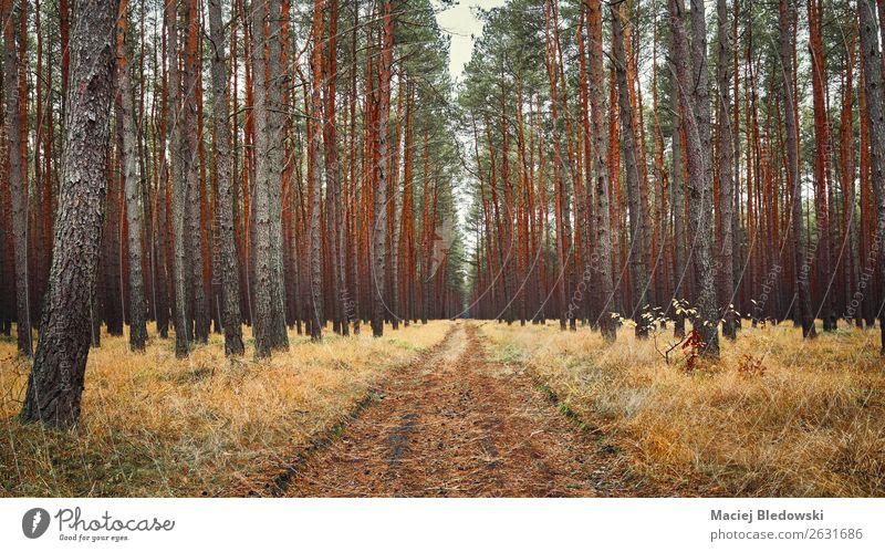 Pfad in einem herbstlichen Wald. Umwelt Natur Landschaft Herbst Pflanze Baum Gras Wege & Pfade entdecken Erholung Nostalgie Perspektive Ferien & Urlaub & Reisen