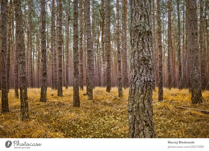 Ferien & Urlaub & Reisen Natur Pflanze Landschaft Baum Einsamkeit Wald Ferne dunkel Herbst Umwelt Gras Aussicht einzigartig Neugier Ziel
