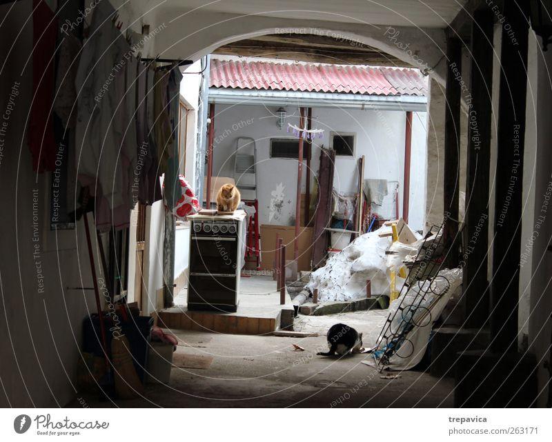 katzendorf Häusliches Leben Wohnung Haus Möbel Raum Wohnzimmer Küche Dorf Kleinstadt Altstadt Einfamilienhaus Mauer Wand Tier Haustier Katze 2 Tierfamilie Armut
