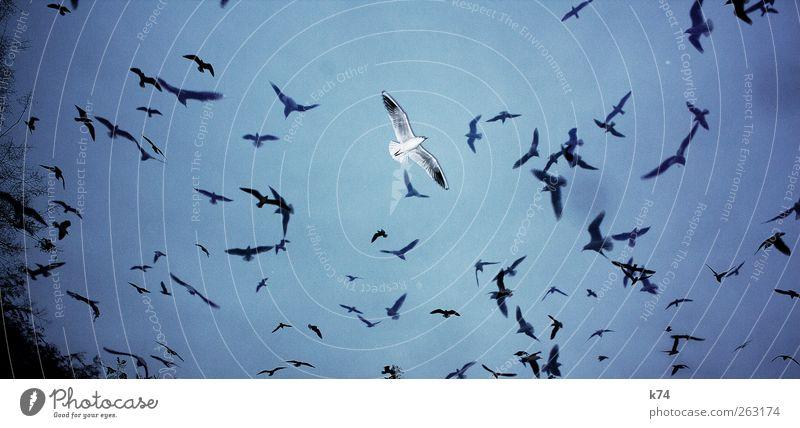 E. von Vielen Himmel Tier Vogel Möve Tiergruppe Schwarm fliegen frei blau Einsamkeit herausragen außergewöhnlich Farbfoto Gedeckte Farben Außenaufnahme