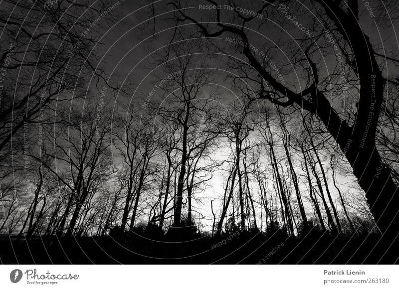 Dark night of the soul Natur Baum Pflanze Einsamkeit Wald Umwelt dunkel Landschaft Erde träumen Stimmung Park Angst Abenteuer ästhetisch Netzwerk