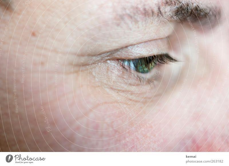 Häuptling Hübsche Wimper Mensch grün Erwachsene Auge Leben Haut maskulin lesen 45-60 Jahre Wimpern Augenbraue