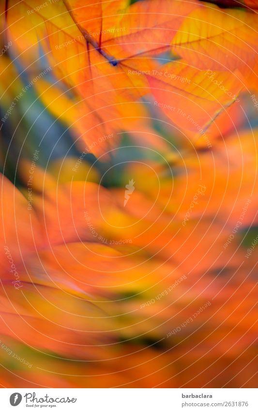 Da fegt ein Herbstwind durch Natur Pflanze Himmel Wind Sträucher Blatt Park leuchten Wärme wild orange Stimmung Bewegung bizarr Farbe Klima Umwelt